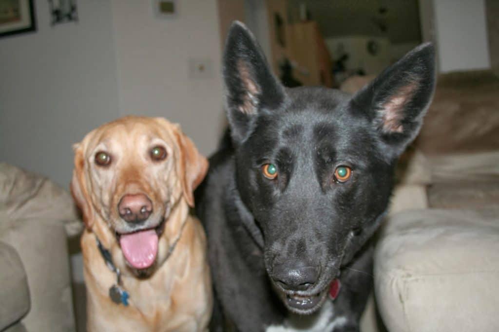 Mia, Lily, Dogs, DSLR
