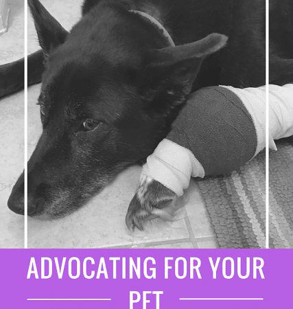 Advocating For Your Pet