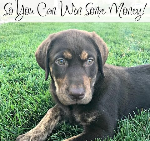 I Got a Puppy!  Now You Can Win Some Money! #Giveaway