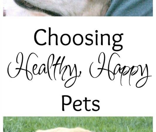 Choosing to have Healthier Pets, Happier Lives™ #HillsTransformingLives