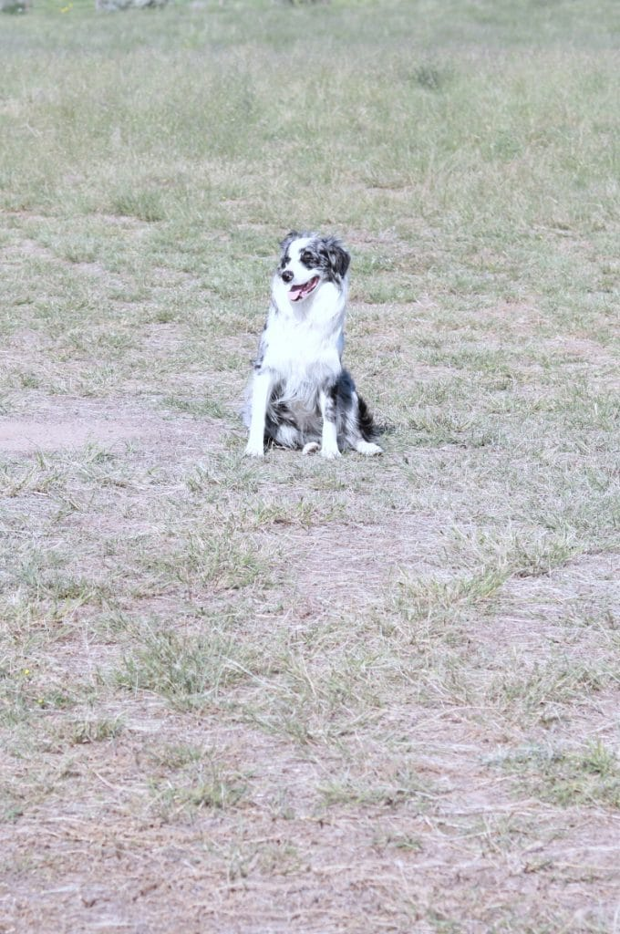 Invisible Fence Adoption event, Project Breathe, Invisible Fence charity, Adoption events in Colorado 2018, Douglas County Canine Rescue, Animal Adoption Events in Colorado