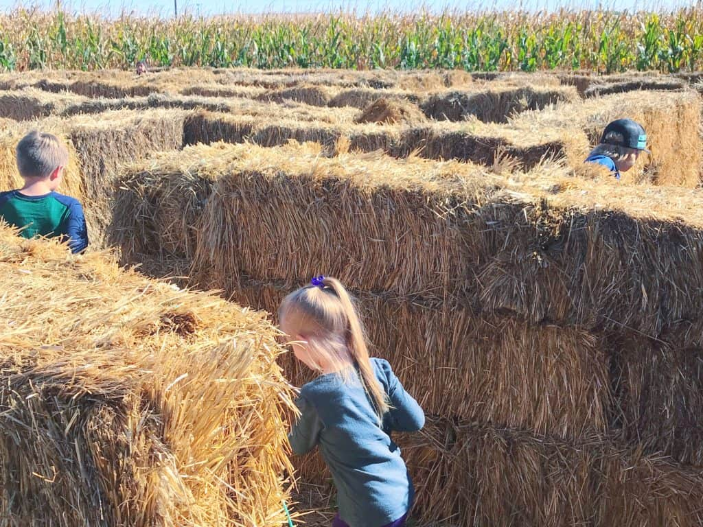 Running through hay bale maze
