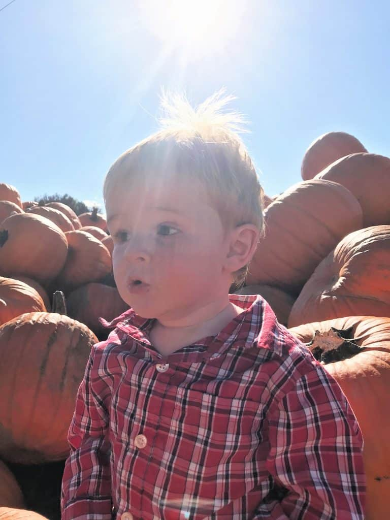 Toddler in Pumpkins