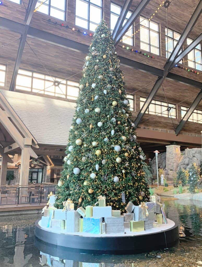 Christmas Tree Gaylord Rockies