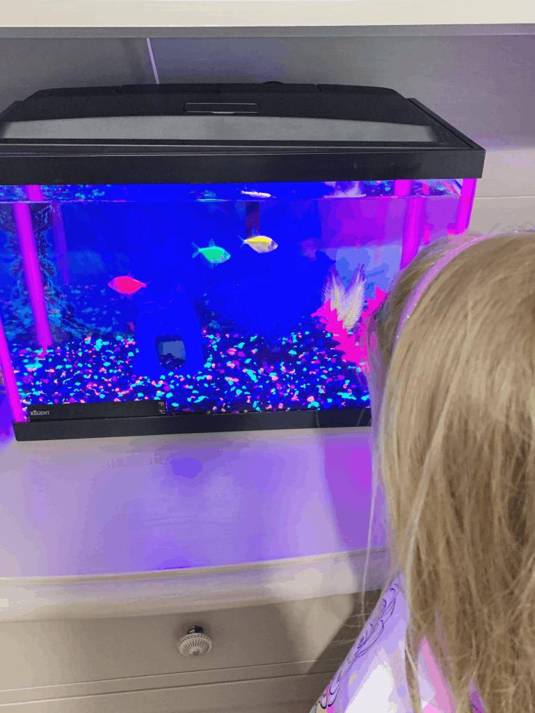 Girl looking at tropical fish