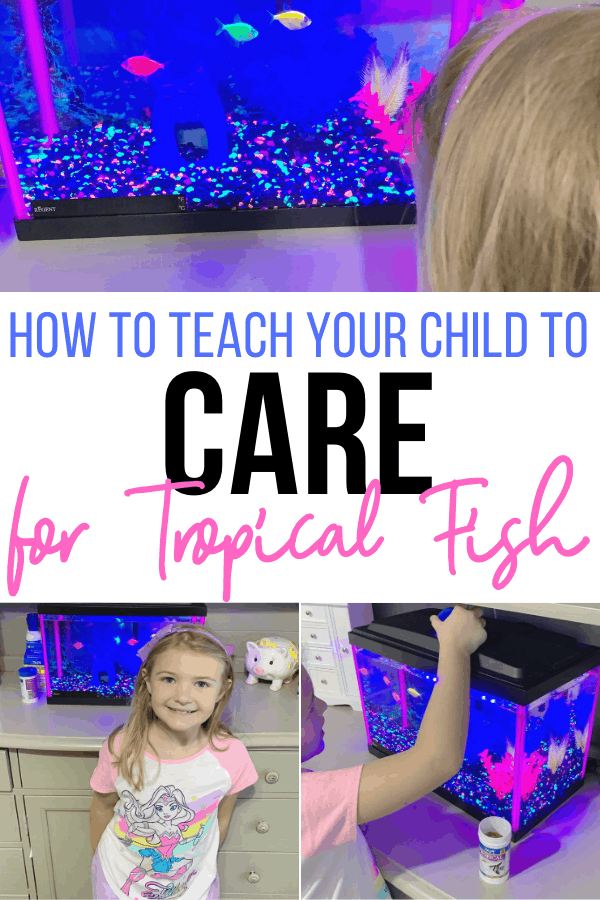 How to teach your child to care for tropical fish
