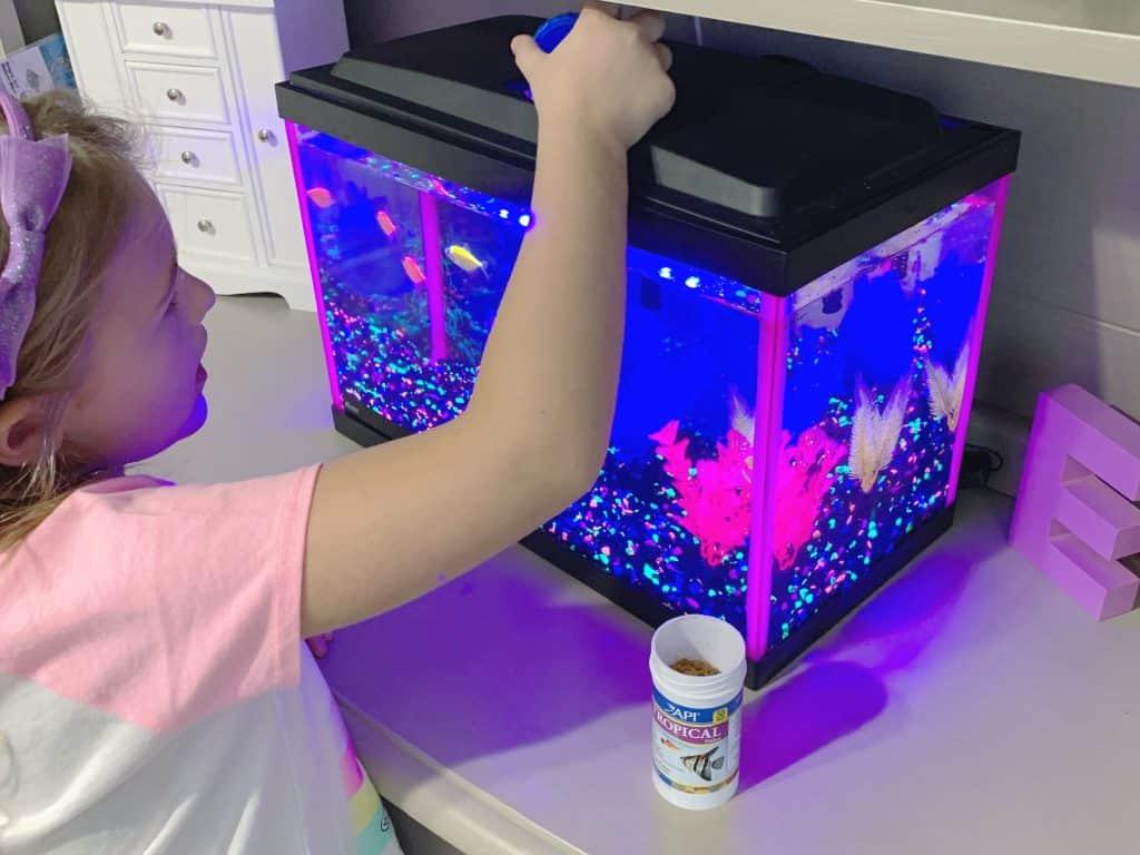Child feeding fish