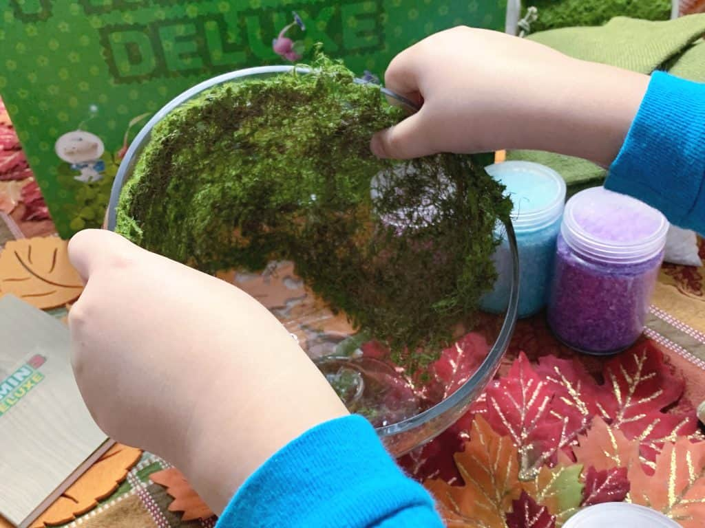 How to build a terrarium with kids