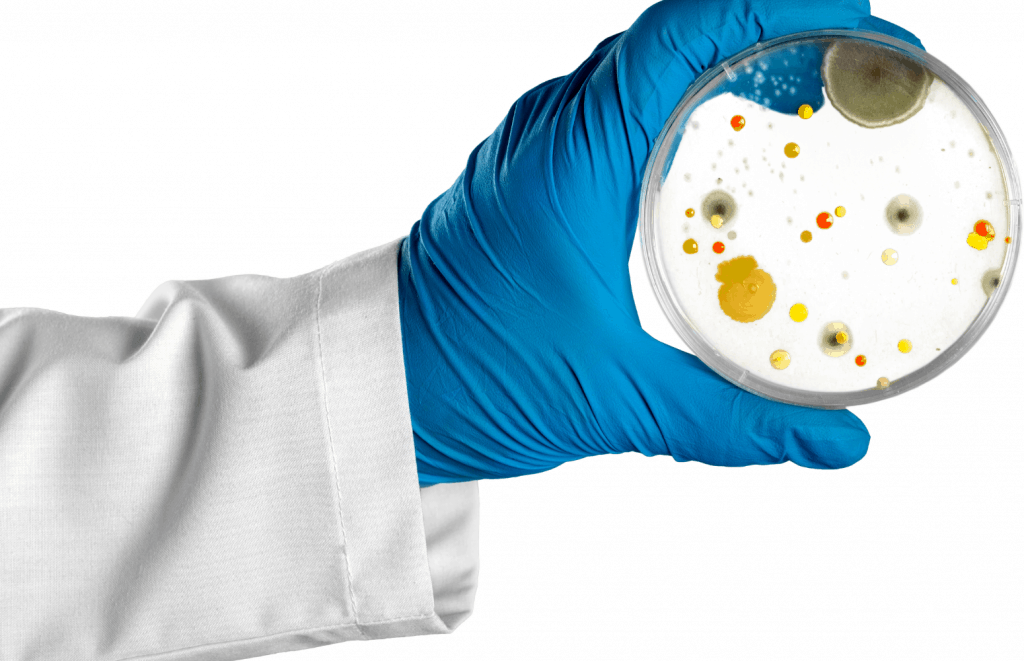 Plated Bacteria